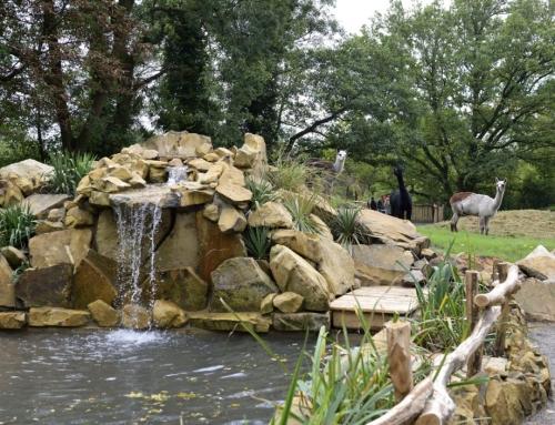 Über 450.000 Besucher – neuer Rekord im Tierpark!