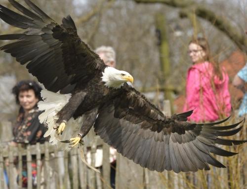 Falknervorführungen im Tierpark Nordhorn