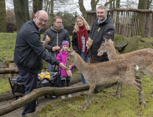 Endlich Hirsche im Tierpark Nordhorn
