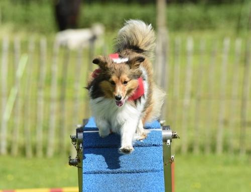 Großer Tag des Hundes im Tierpark Nordhorn