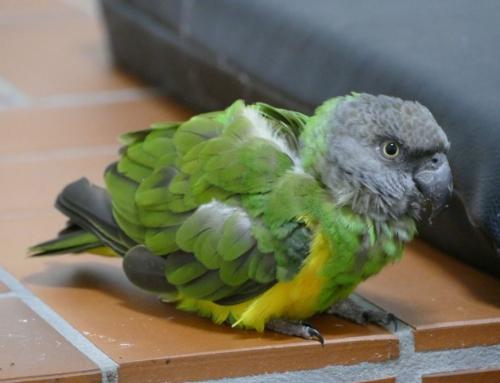 Seltener Gast in Polizeigewahrsam: Papagei verbringt eine Nacht in der Zelle