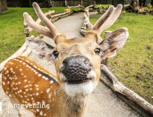 Neue Publikumslieblinge und Artenschutzbotschafter