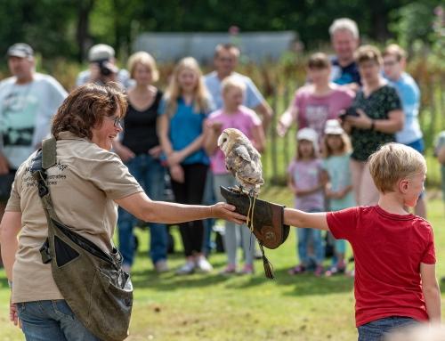 Falknervorführungen im Tierpark Nordhor