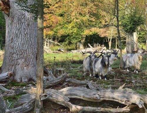 Letzte Herbstführung durch den Hutewald in Bentheim