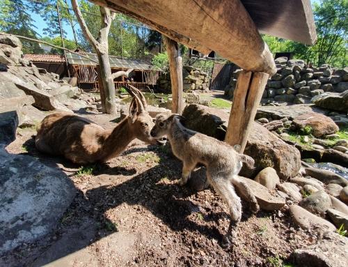 Jungtierzeit im Tierpark Nordhorn