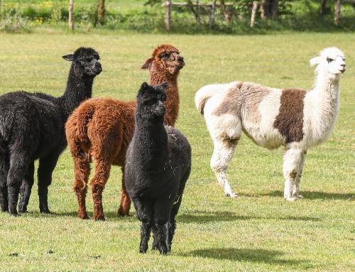 Tierparkunterstützung durch Boom bei Tierpatenschaften