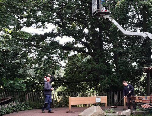 Endlich geschafft! Keine Last mehr mit Eichenprozessionsspinnern im Tierpark Nordhorn