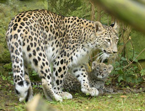 Tierpark Nordhorn nimmt Abschied von zwei tierischen  Persönlichkeiten