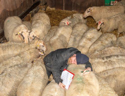 Angetreten zum Zählen – Jährliche Inventur im Tierpark Nordhorn