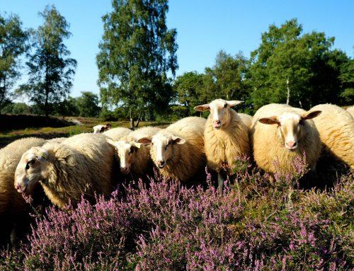 """Der Tierpark Nordhorn wird Teil der """"Globalen Koalition für Biodiversität"""""""