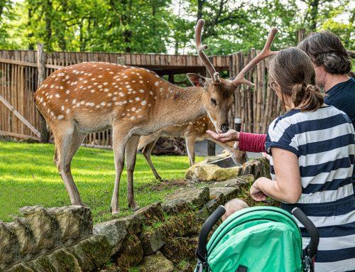 Reservierungspflicht für Jahreskarten entfällt im Tierpark Nordhorn